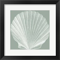 Framed Seabreeze Shells II (P)