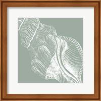 Framed Seabreeze Shells III (P)
