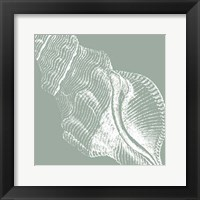 Framed Seabreeze Shells III (P)