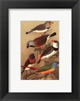 Framed Cassel's Petite Songbirds I