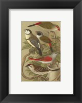 Framed Cassel's Petite Songbirds II