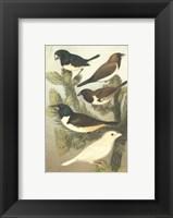Framed Cassel's Petite Songbirds IV