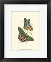 Framed Butterflies III