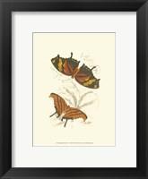 Framed Butterflies V