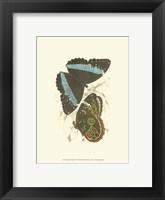 Framed Butterflies VI