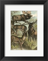 Framed Johnson's Deer & Elk