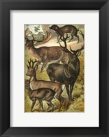 Framed Johnson's Deer