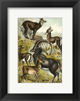 Framed Johnson's Antelope