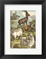 Framed Johnson's Goats