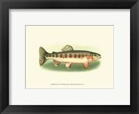 Framed River Trout II