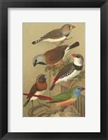 Framed Cstm Cassel's Pet. Songbirds I