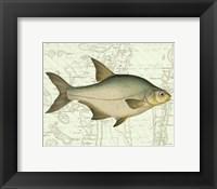 Framed Freshwater I