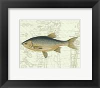 Framed Freshwater II
