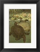 Framed Pond Turtles