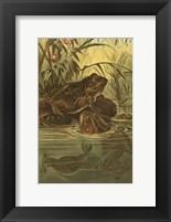 Framed Pond Frogs