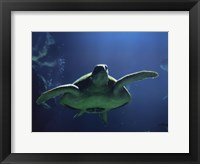 Framed Aegean Sea Turtles II