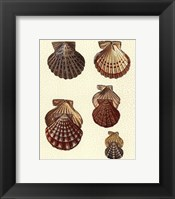 Framed Crackled Antique Shells I