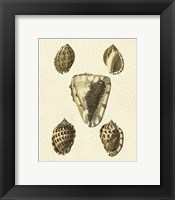 Framed Crackled Antique Shells IV