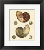Framed Crackled Antique Shells VII