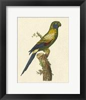 Framed Crackled Antique Parrot I