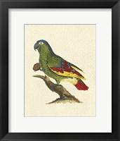 Framed Crackled Antique Parrot II