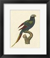 Framed Crackled Antique Parrot III