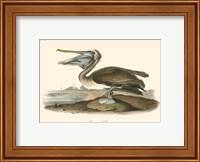 Framed Brown Pelican (horizontal)