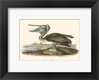 Framed Brown Pelican (horizontal)