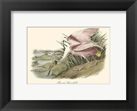 Framed Roseate Spoonbill (light pink)