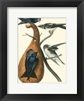 Framed Purple Martin