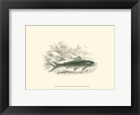 Framed Lizars' Game Fish I