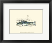 Framed Lizars' Game Fish II