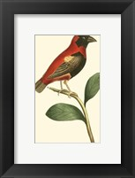 Framed Crimson Birds I