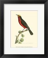 Framed Crimson Birds II