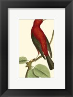 Framed Crimson Birds III