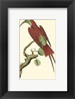 Framed Crimson Birds IV