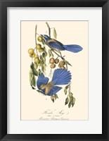 Framed Audubon Florida Jays