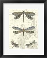 Dragonfly Delight I Framed Print