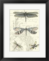 Framed Dragonfly Delight II