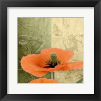 Framed Orange Poppies III