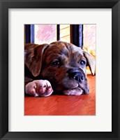 Framed Kratos Baby Pit Bull