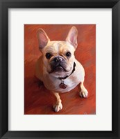 Framed Sophie French Bulldog