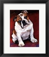 Framed Bulldog Baby
