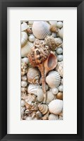 Framed Shell Menagerie III
