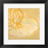 Framed Shoreline Shells I