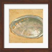 Framed Shoreline Shells III