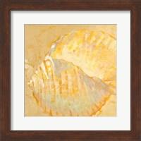 Framed Shoreline Shells IV