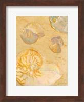 Framed Shoreline Shells VI