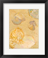 Framed Shoreline Shells VI
