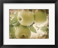 Framed Vintage Apples II